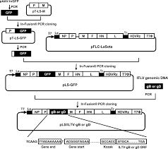 newcastle disease virus ndv recombinants expressing infectious