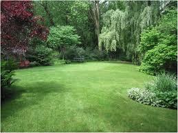 Landscaping Ideas For Privacy Backyards Appealing 25 Best Ideas About Backyard Landscape