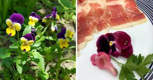 Where To Buy Edible Flowers - edible flowers from the garden to the kitchen travel gluttons