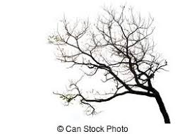 branches stock photo images 940 450 branches royalty free images