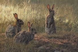 rabbit prints rabbit prints by wildlife artist martin ridley