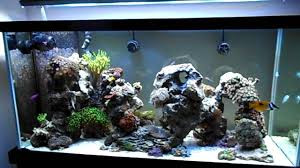 Reef Aquascape Designs Aquascaping In My 90g Reef Youtube