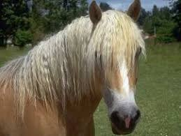 hairstyles for horses hairstyles horses pinterest horse