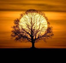 Sun Memes - put me like 盞 the sun tree