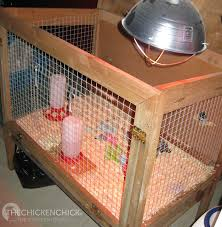 chicken brooder heat lamp with the chicken dangers of