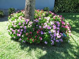 native florida plants for home landscapes native florida plants article