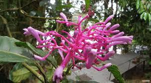 Native Plants In The Tropical Rainforest 10 000 Amazon Rainforest Plants Ecuador 100 Pictures
