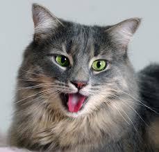 Cat Heavy Breathing Meme - heavy breathing cat the best cat 2018