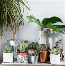 plantes chambre conseils déco chambre exotique made in meubles chambres