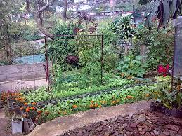 backyard gardening sweet pea trellis