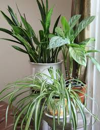 five reasons your house plants are dying