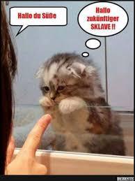 s e katzen spr che 1057 best katzen so süß und lustig images on cat