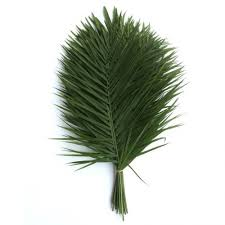 palms for palm sunday purchase palm leaves and branches for palm sunday