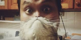 Cat Instagram A Brief History Of Catbearding The Most Popular Meme On Instagram
