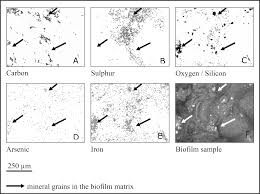 taxonomic and chemical assessment of exceptionally abundant rock