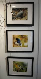 an extraordinary and inspiring young birder and artist u2014 the