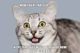 joke4fun memes cats wish you a happy birthday