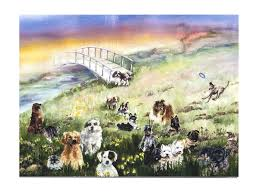 sympathy cards for pets rainbow bridge pet sympathy card for dog pet