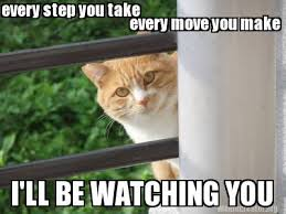 Spy Meme - spycat very first meme spy cat meme pinterest meme