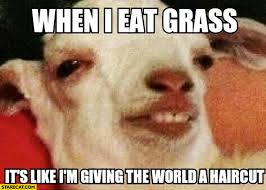 Meme Eat - when i eat grass it s like i m giving the world a haircut sheep
