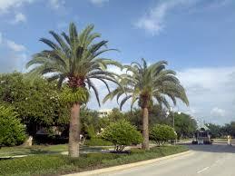 palm tree landscaping u2014 paulele beach house