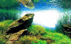 amano aquascape takashi amano creator of the nature aquarium aquascaping