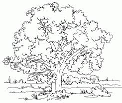 printable tree coloring pages for kids of a family tree