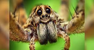 imagenes animales australia los animales más peligrosos de australia contacto global
