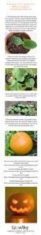 1000 images about garden on pinterest poisonous plants grow