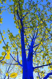artist konstantin dimopoulos is painting blue trees in the denver