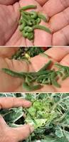 51 best organic pest u0026 weed control images on pinterest