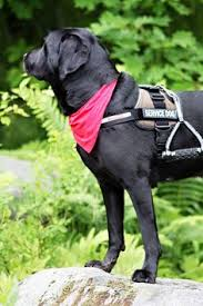 Leader Dogs For The Blind Jobs What It U0027s Like To Train Guide Dogs For The Blind Dog Careers
