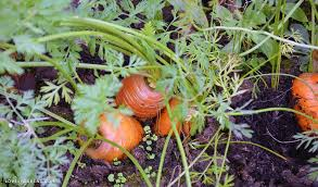 gardening tips lovely greens