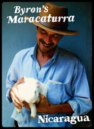 byron s maracaturra nicaragua thanksgiving coffee company