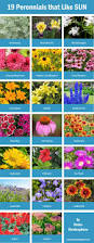 Low Maintenance Plants And Flowers - 10 low maintenance perennials perennials yards and gardens