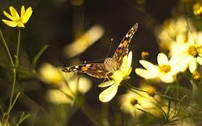 wallpaper butterflies flowers flying patterns reflections hd