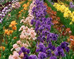 popular photograph perennial flowers for sun commendable cactus