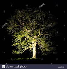 lit up tree at stock photo royalty free image 28808116 alamy