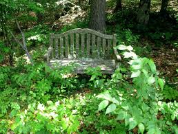 overgrown garden my overgrown garden bench overgrown garden ayebee