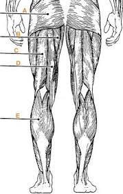 Quiz Anatomy Muscle Attachemnts For The Ulna And Radius Quiz By Keeperhes