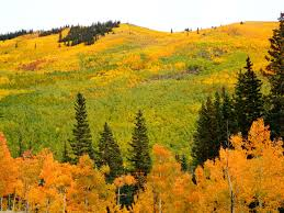 fall colors kenosha pass gallery