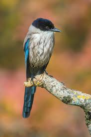 1838 best beautiful birds images on pinterest beautiful birds