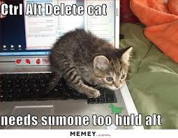 Funny Computer Meme - a kitten on a keyboard memey com