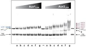 frontiers the bacillus subtilis conjugative plasmid pls20