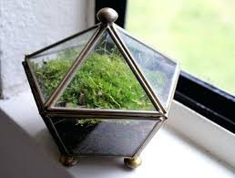 low light plants for office low light terrarium 9 low maintenance plants for the office moss