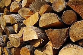 free photo trees logs sawn wood free image on pixabay 1047792