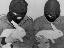 Emma Freud Rabbit Hutch 46 Best Rabbit U0027s Moon Images On Pinterest Rabbits Bunnies And