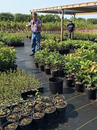 iowa native plants field day recap native iowa trees and shrubs with mike bevins