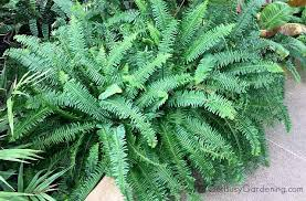 Common Tropical House Plants - tropical houseplant care a guide to growing tropical plants indoors