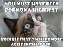Best Grumpy Cat Memes - the most funniest grumpy cat memes freakypet